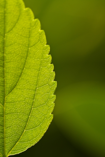 close up of a leaf